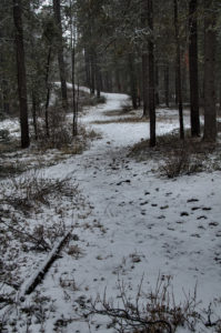 Path in the Pines 2